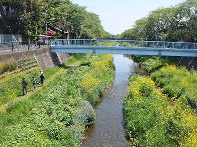 野川沿いをジョギング: 午後4時...